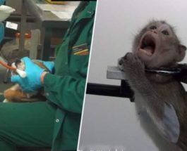 тесты на животных.