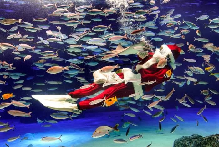 Дайвер в костюме Санта-Клауса