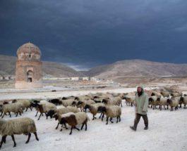 Пастух идет со своим стадом