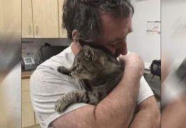 Трогательная встреча кота и его владельца
