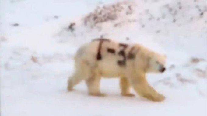 Т-34 на белом медведе