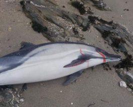 англия дельфины