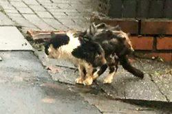 """Люди скинулись всем миром и спасли кота по прозвищу """"Вонючий кот"""""""