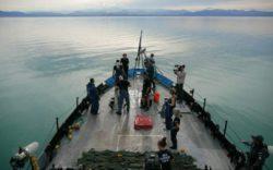 """Создатели фильма """"Море Теней"""" рисковали своими жизнями: мексиканские наркокартели и китайская мафия открыто им угрожали (Видео)"""