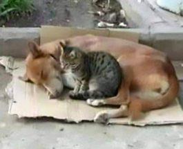 отравили кошку и собаку