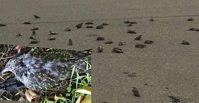сотни мертвых птиц