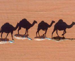 Ежегодный фестиваль верблюдов