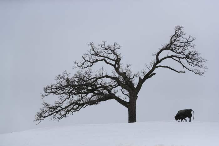 Зимний пейзаж из Айовы, США.