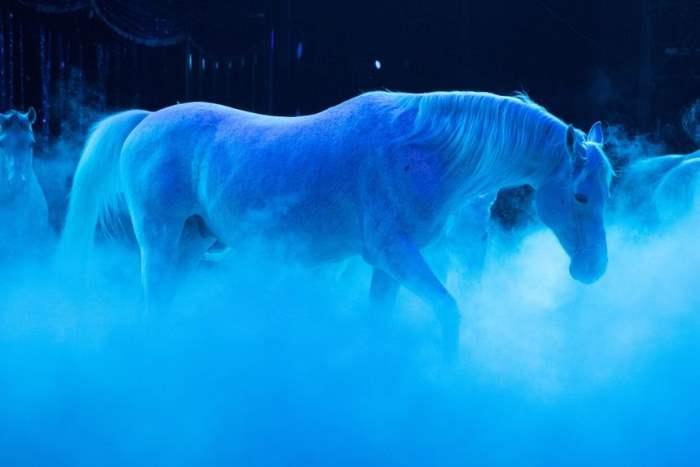 Лошади во время представления