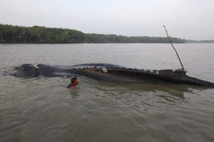 Рыбак осматривает тело горбатого кита