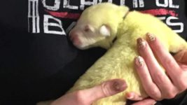 Светло-зеленый щенок