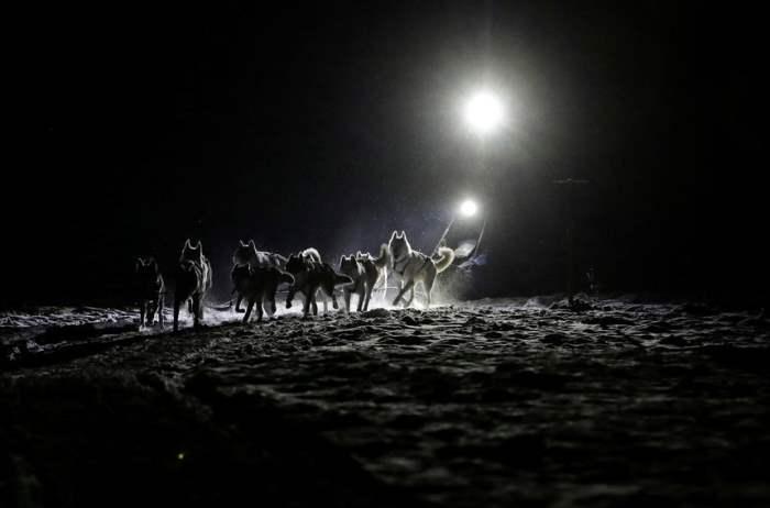 Традиционная пятидневная гонка на собачьих упряжках в Чешской Республике