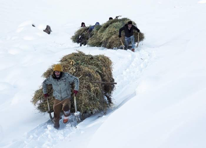 Фермеры везут корм