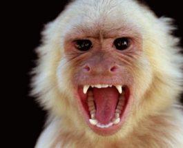 индия обезьяна бешенство