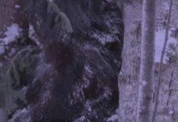 В Канаде охотник заснял на камеру Йети