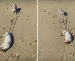 коты на пляже