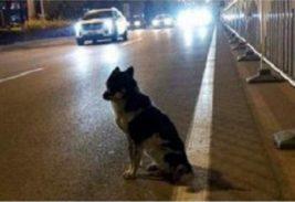собака китай