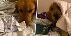 Собака спасла людей от поездки в Ухань (ФОТО)