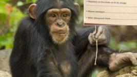 шимпанзе меню