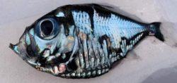 Причудливая «рыба Пикассо» была поймана в Японии