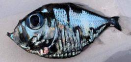news-picasso-fish