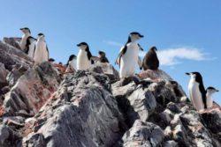В Антарктиде от голода умирают пингвины