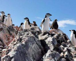 Антарктида,пингвины,голод