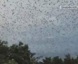 Более 300 000 летучих мышей