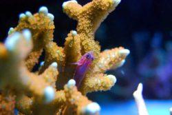 Коралловые рифы могут погибнуть гораздо быстрее, чем предполагали ученые