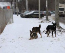 Красноярск,собаки,убийство