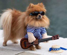 Пес в смешном костюме