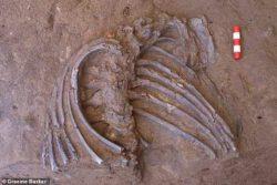 Скелет неандертальца возрастом 70 000 лет, обнаружен на месте «цветочного захоронения» в Ираке