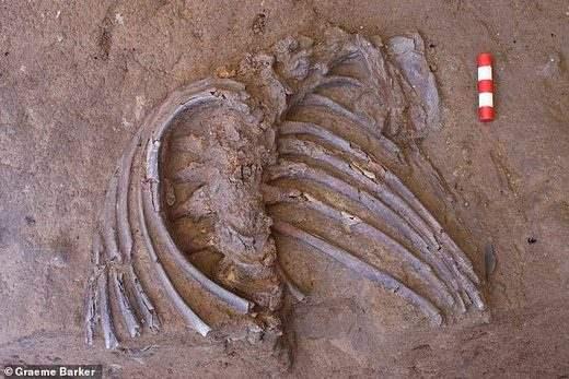Скелет неандертальца