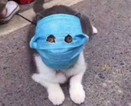 животные в масках