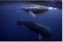 Новые исследования показывают, что солнечные пятна могут вызывать массовую гибель китов.