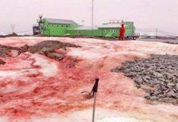 Около украинской антарктической станции «Академик Вернадский» снег стал ярко-красным