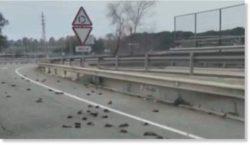 Сотни мертвых птиц на дороге обнаружены в Испанской Каталонии
