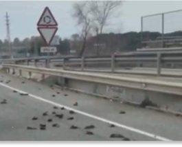 птицы на дороге