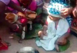 Странная свадебная церемония между ребенком и собакой состоялась в Индии