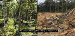 Человек потратил 20 лет на посадку крупнейшего питомника тропических деревьев в Малайзии, и сегодня он полностью снесен