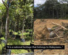 уничтожение леса
