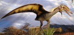 Три новых птерозавра обнаружены в Сахаре