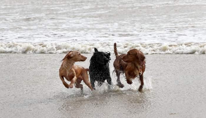 Собаки наслаждаются ветреной погодой
