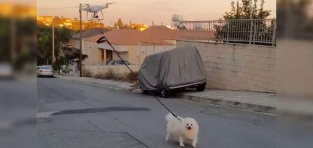 выгул собаки,беспилотник,коронавирус,изоляция,карантин