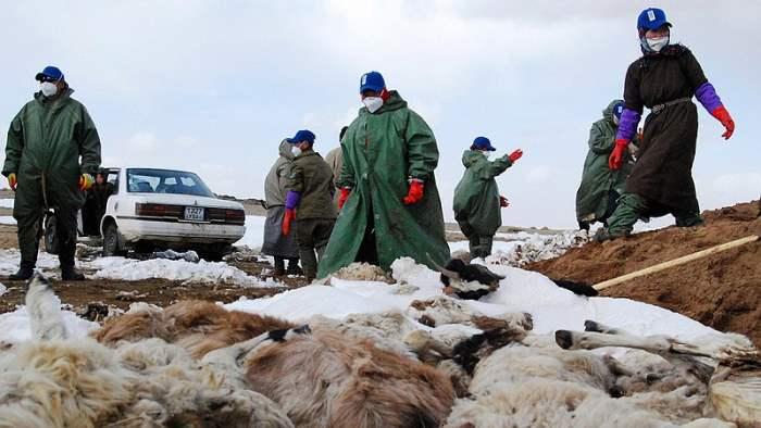 монголия холода