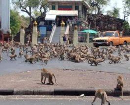 обезьяны Таиланд