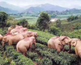 слоны Китай