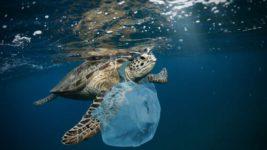 черепаха пластик