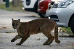 Животные отвоевывают у людей города во время карантина (ВИДЕО)