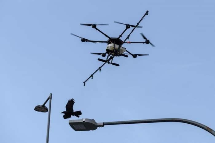 Птица пролетает мимо беспилотника